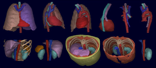MIPG Lab at Penn Medicine: Segmentation of representative organs in thorax and abdomen from CT images.