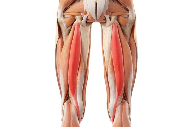 Hamstring Injuries – Penn Medicine