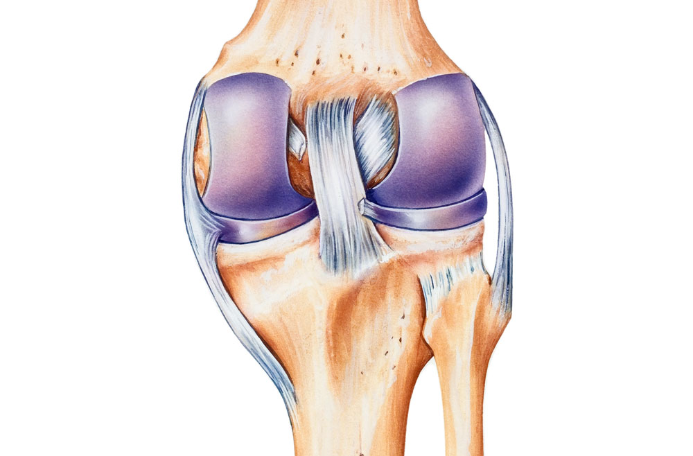 Medial Collateral Ligament Injury (MCL) – Penn Medicine