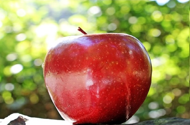 Image of an apple outside in the sun
