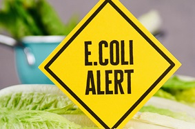 romaine_lettuce_laying_in_front_of_blue_dish_with_yellow_ecoli_warning_yield_sign