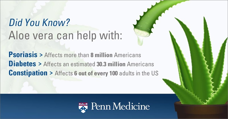 infographic_shows_pieces_of_aloe_explains_how_it_helps_with_diabetes_psoriasis_constipation