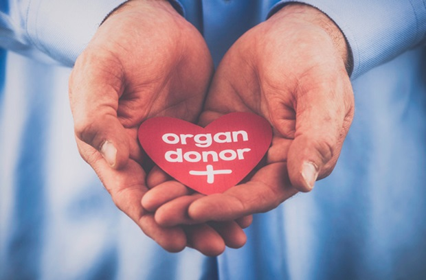 photo of a pair of hands holding a cardboard cut-out heart that says organ donor on it